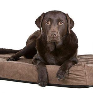 Hondenmatras