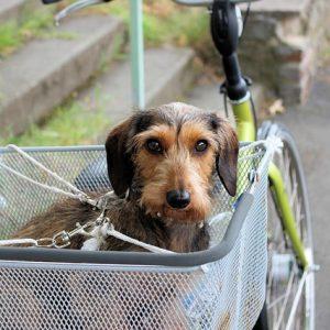Hondenfietsmand